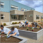 Students planting in raised garden beds, link to larger image